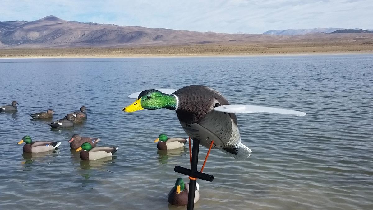 Lucky Duck Junior II