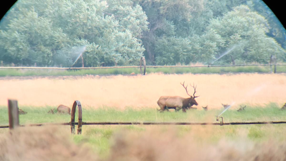 Glassing a Nice Bull Elk